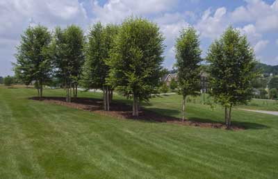 Lawn Irrigation in Johnson City, Tennessee